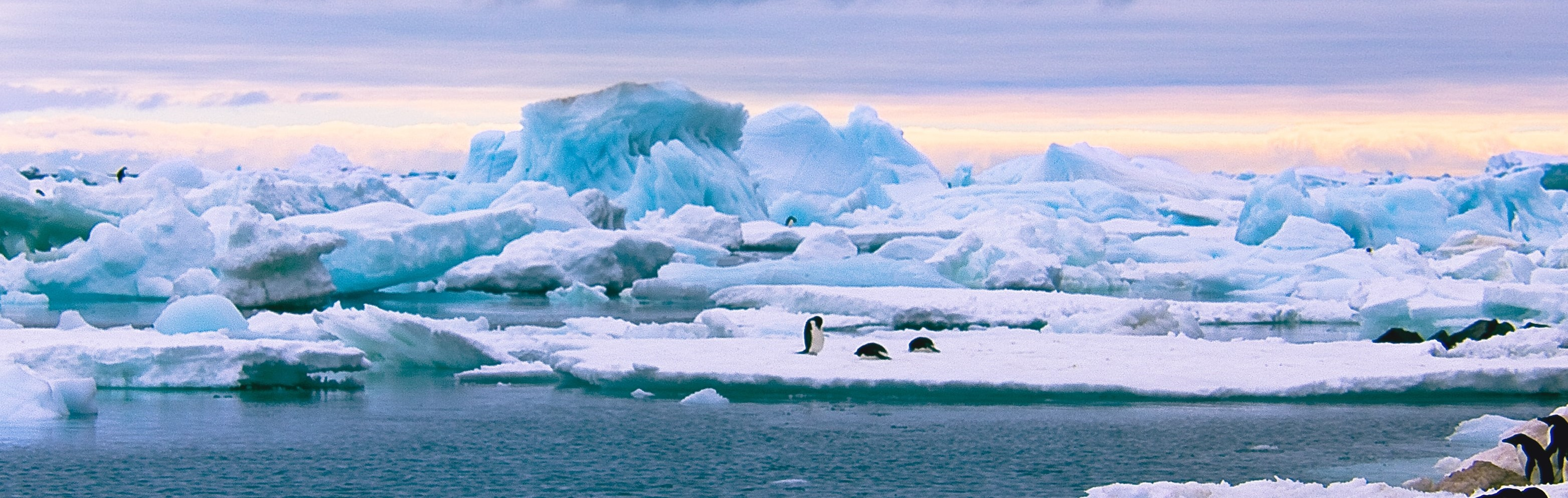 What Business Leaders Can Learn From The Age of Antarctic Exploration